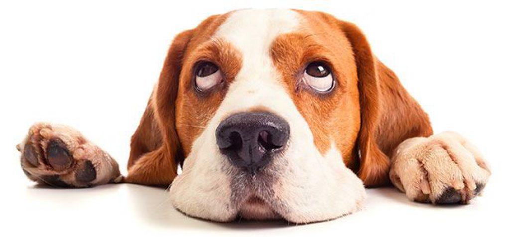 does dry dog food go bad
