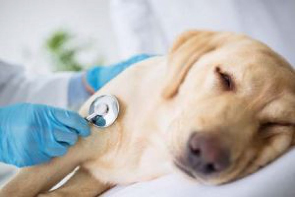 Dog Enlarged Heart Natural Treatment