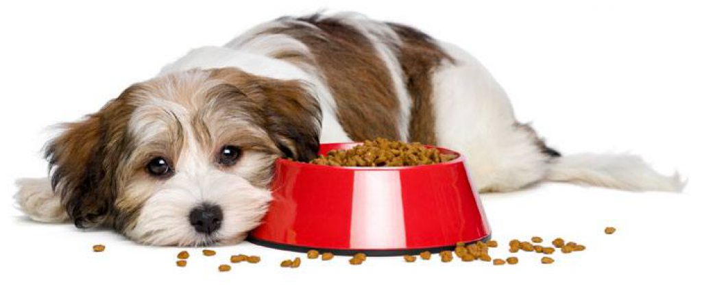 does dry dog food go bad