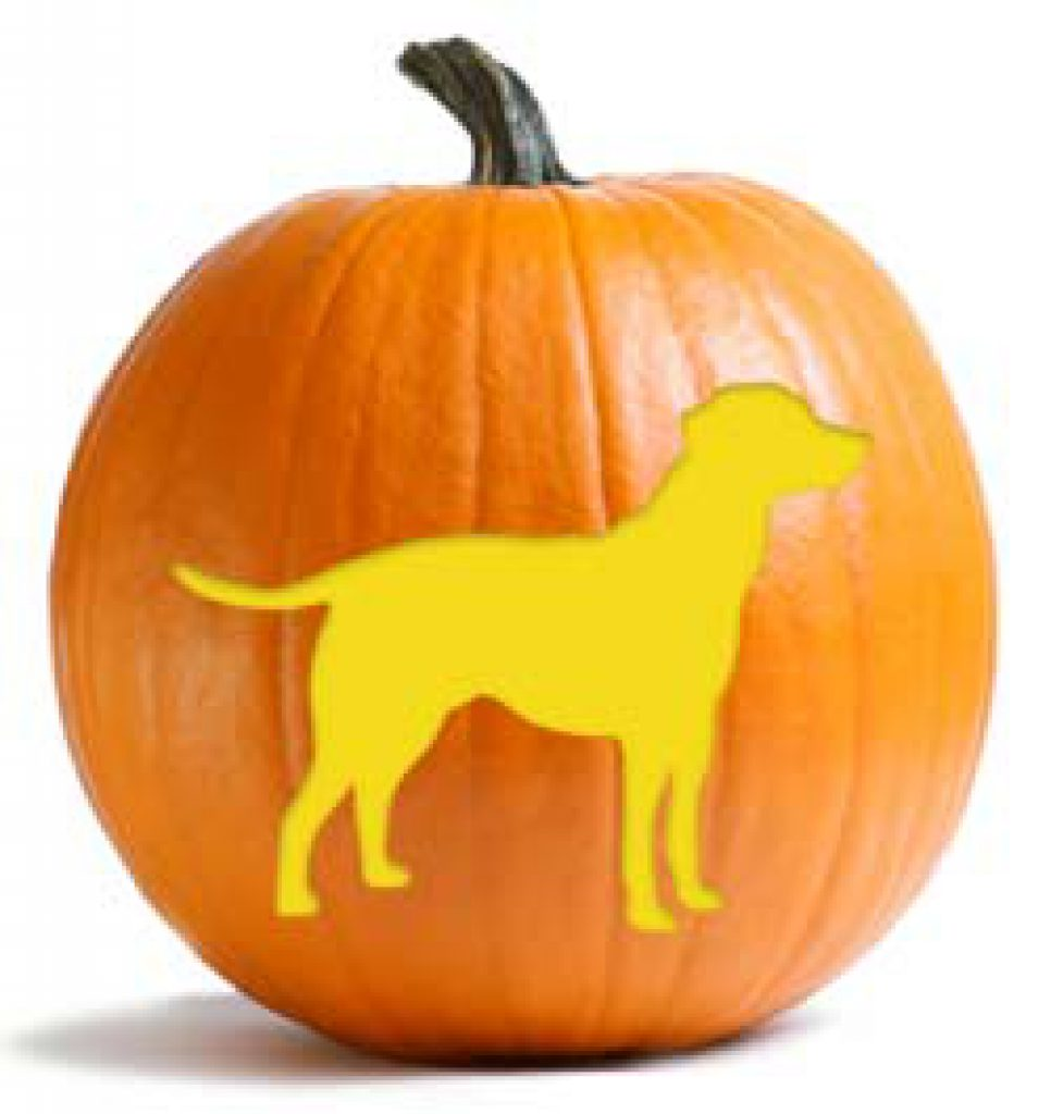 pumpkin dosage for dog diarrhea