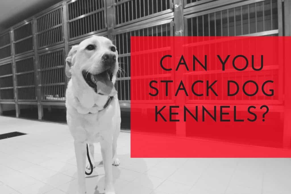 Can You Stack Dog Kennels to Save Space