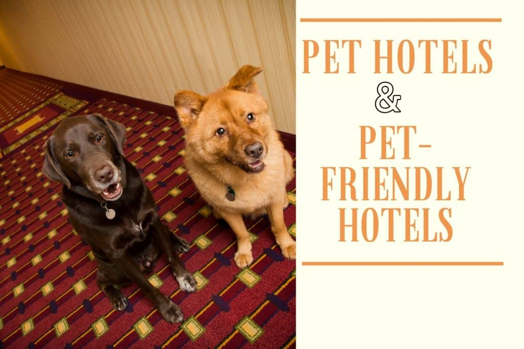 Pet Hotels and Pet-Friendly Hotels