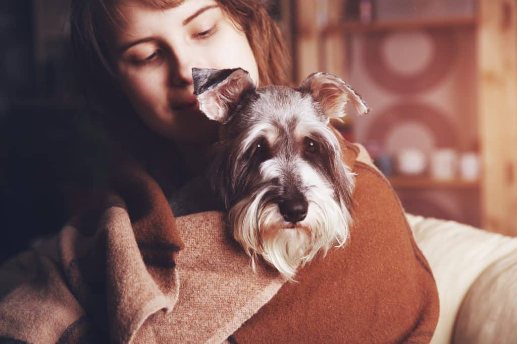 Tips For Choosing Hypoallergenic Dogs