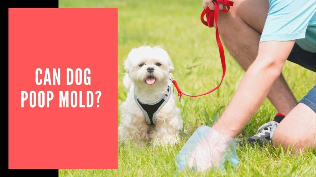 Can Dog Poop Mold