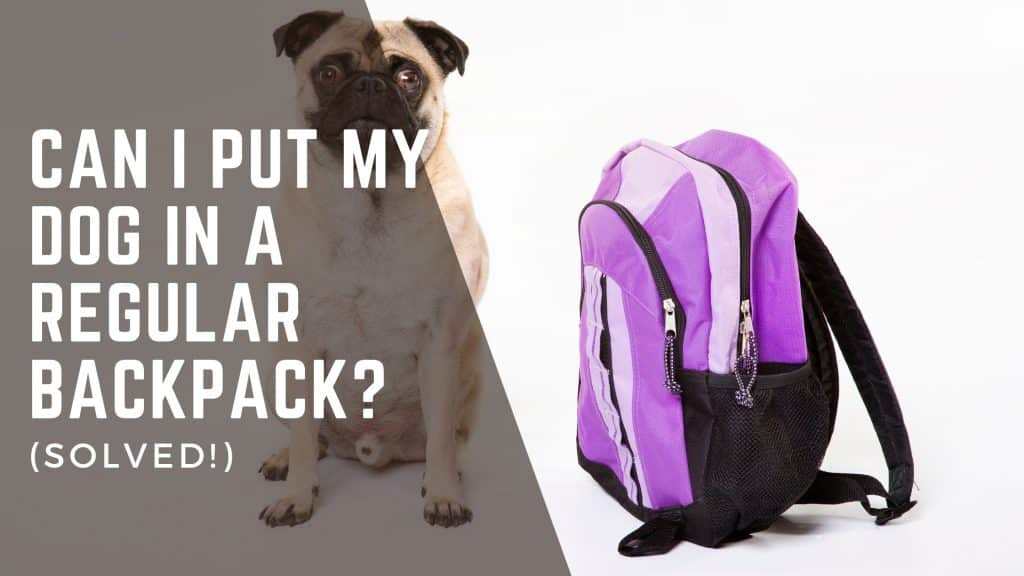 Can I Put My Dog In A Regular Backpack