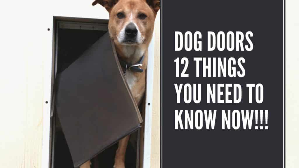 Dog Doors Things You Need To Know