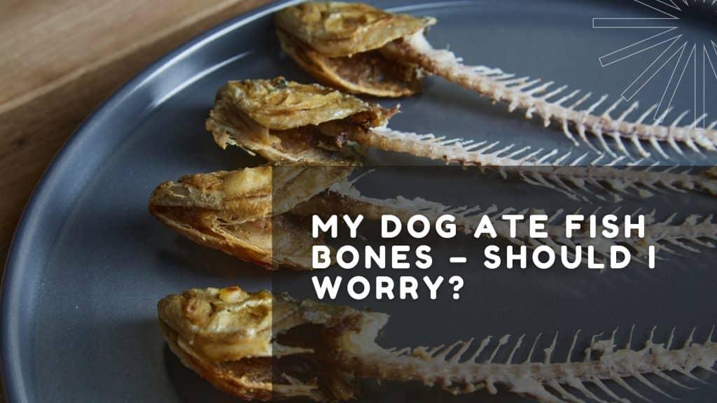 My Dog Ate Fish Bones