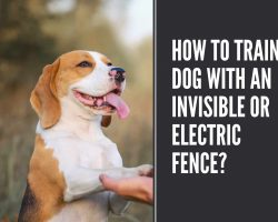 How To Train A Dog With An Invisible fence