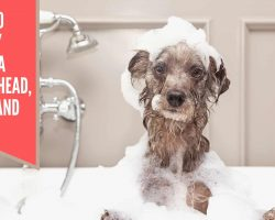 How to Safely Wash a Dog's Head, Face, and Ears