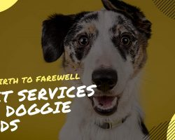 Pet Services For Doggie Needs