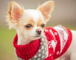 best dog breeds for small space