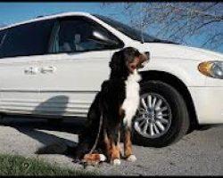 dog barrier for minivan