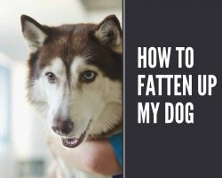 how to fatten up my dog