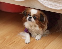 under bed blocker for pets