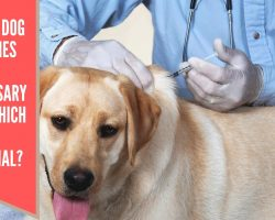 which dog vaccines are absolutely necessary